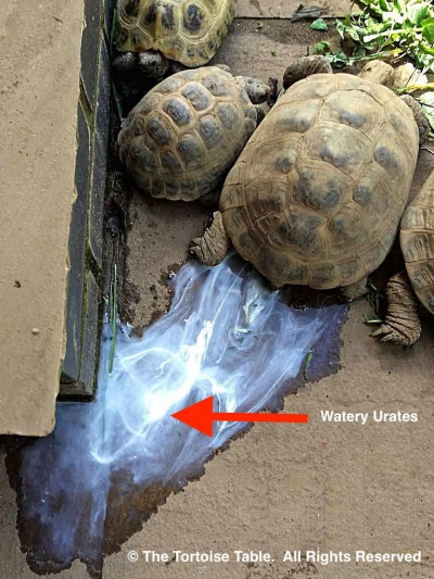 Signs Of A Healthy Tortoise