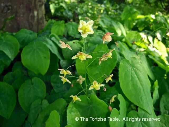 Browse And Search The Tortoise Table Plant Database