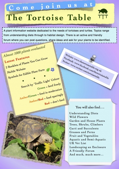 Flyers business cards for Tortoise table org uk site plants