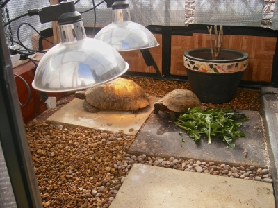 Outdoors it has two basking lights and an insulated sleeping area with a tubular heater this is perfect for large tortoises aloadofball